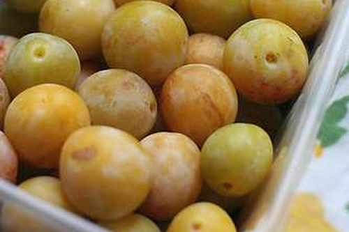 french fruit mirabelles