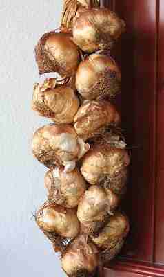 Smoked garlic of Arleux by Rubber Slippers in Italy
